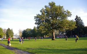 estonia-tree_3221126b